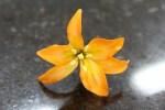 Confeitaria Fina - Flores 01B - 002