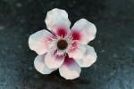 Confeitaria Fina - Flores 01B - 008