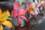 Confeitaria Fina - Flores 01B - 009