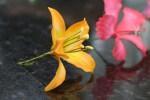 Confeitaria Fina - Flores 01B - 010
