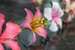 Confeitaria Fina - Flores 01B - 011