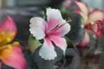 Confeitaria Fina - Flores 01B - 012