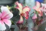 Confeitaria Fina - Flores 01B - 013